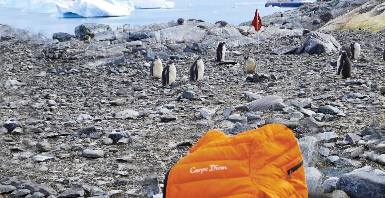 Astrid i Antarktis Hurtigruten Carpe Diem