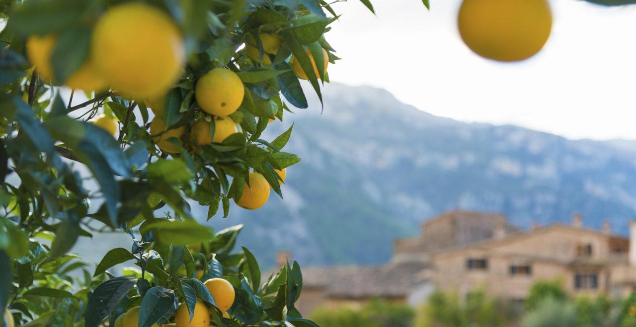 Fornalutx, Mallorca, Spania
