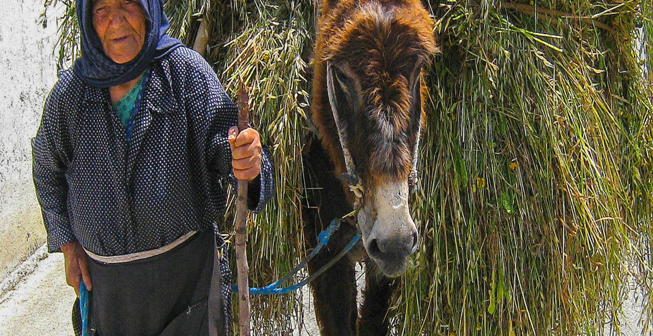 Kypros esel Letymbou Village foto_Geoff_Burgess