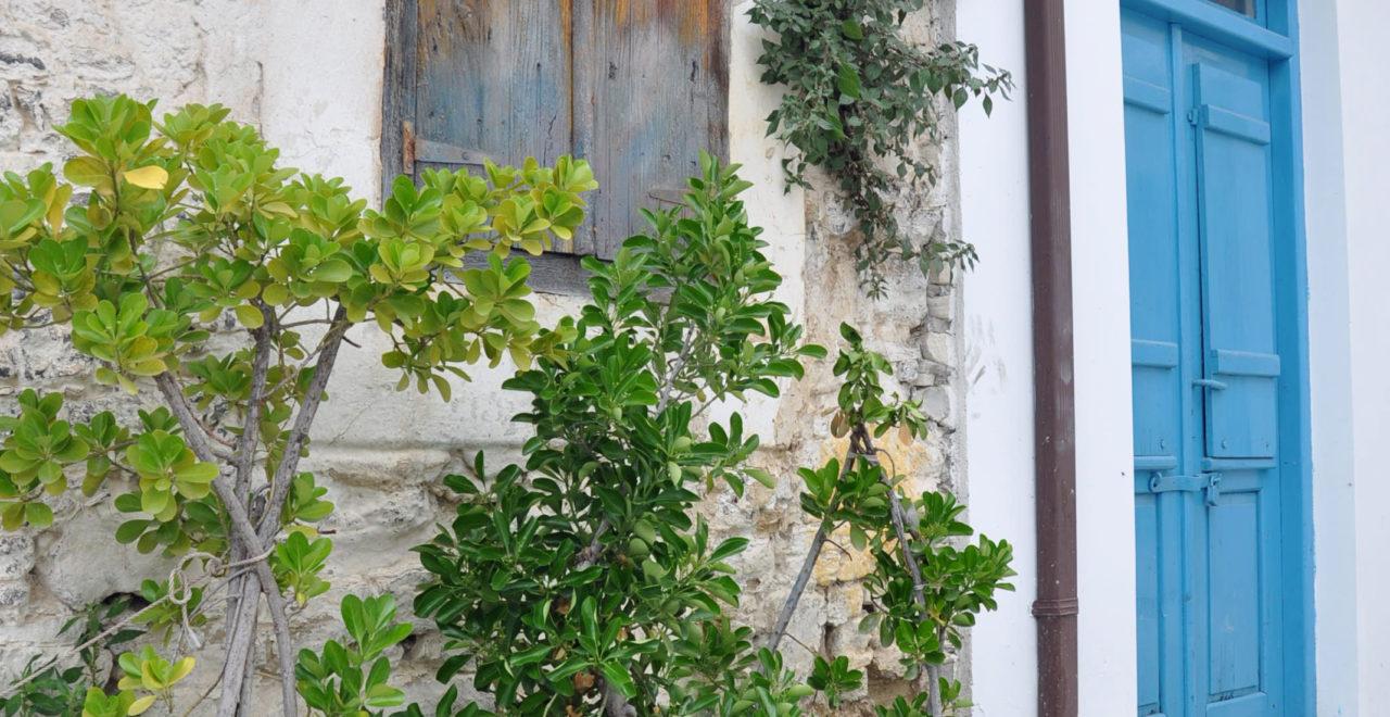 Kypros_Omodos_Trodos