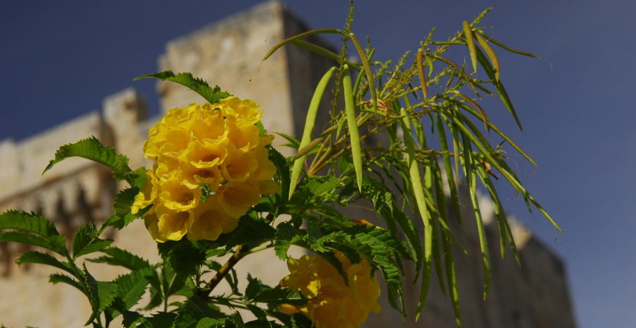 Kypros blomster