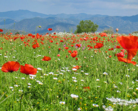 fra Lysos til Pafos, Kypros, foto:Geoff Burgess