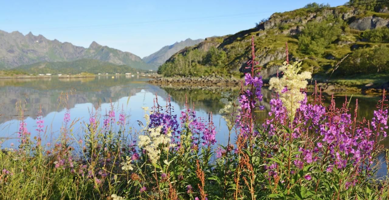 Lofoten Norge