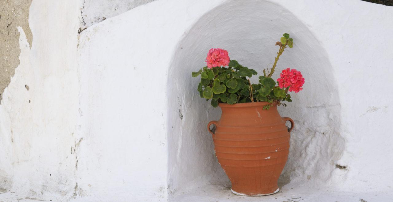 Tinos, blomst, Kykladene, Hellas
