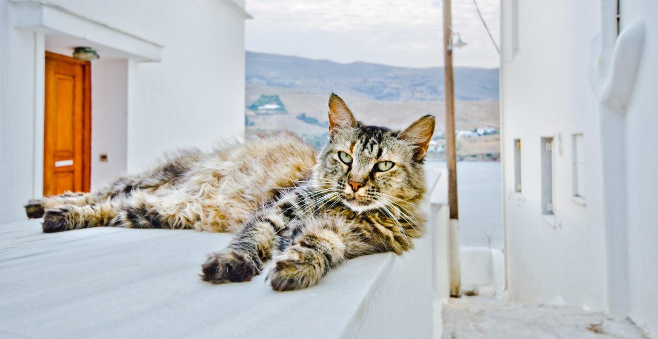 Andros Hellas