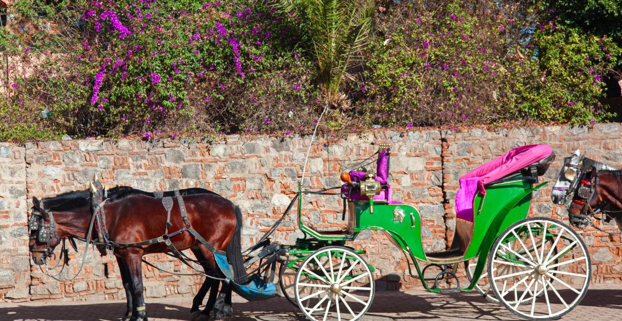 hest kjerre Marrakech Marokko