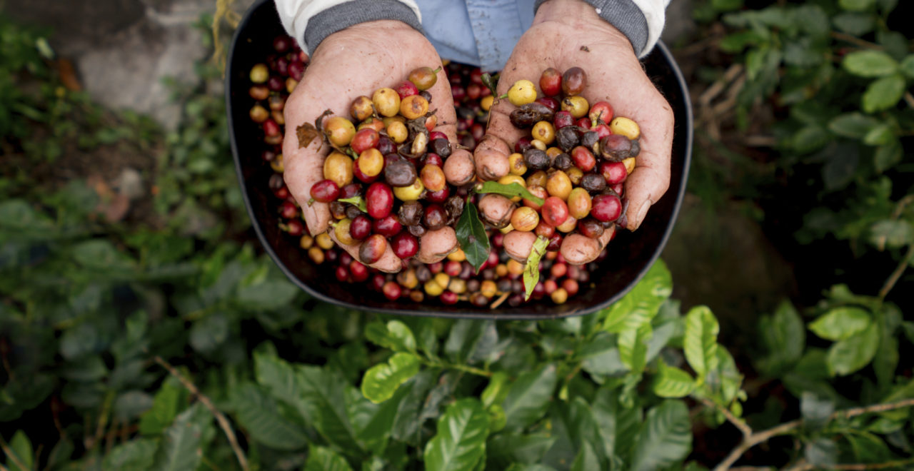 Kaffe, Colombia
