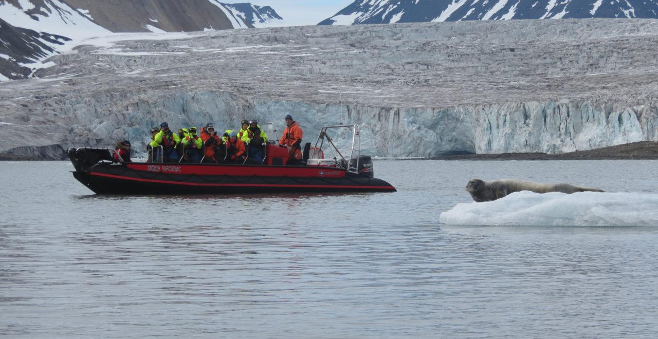 Svalbard rib båt sel