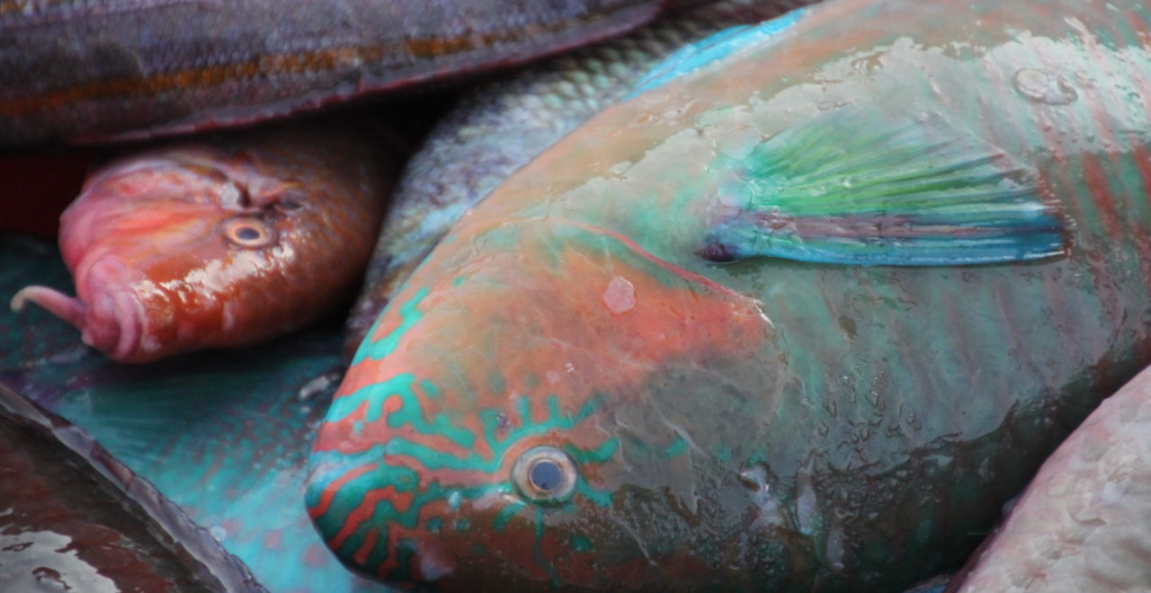 Vietnam Hoi An fototur fisk