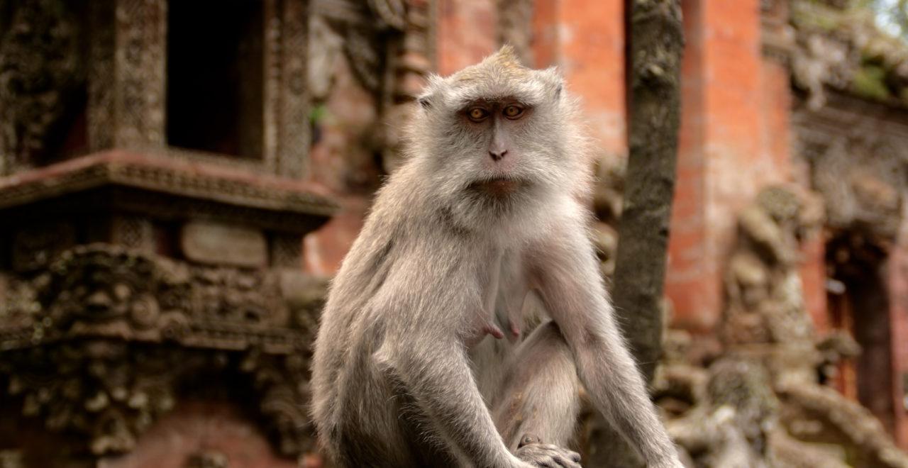Indonesia Ubud Bali Monkey Forest