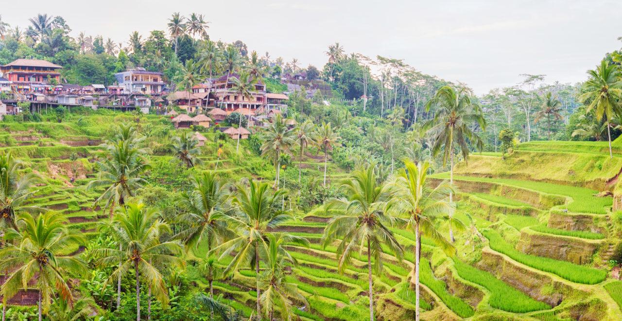 Indonesia Ubud Bali Tegalalang village