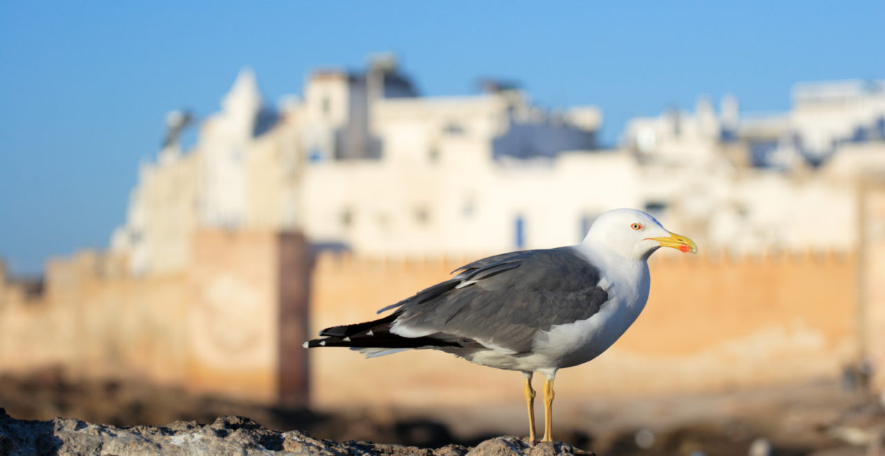 Marokko Essaouira