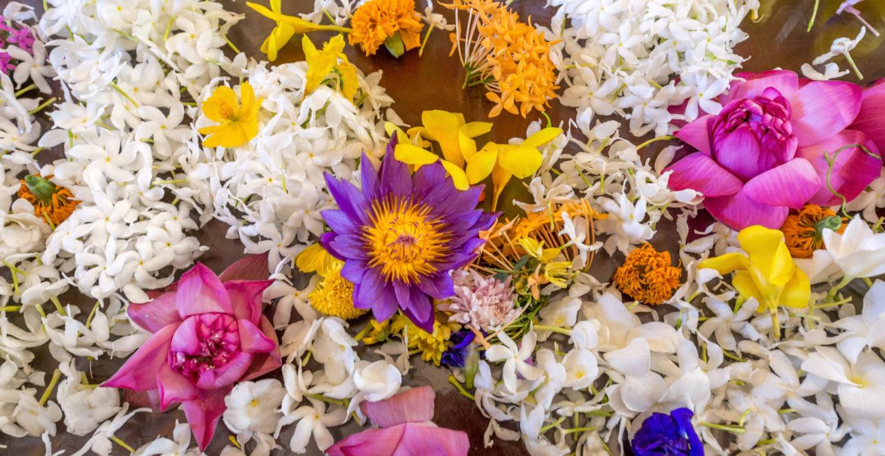 Sri Lanka, tempel, blomster