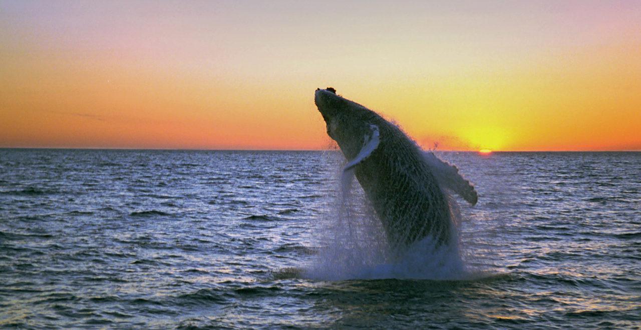 hval vann stikk opp dating skanning Fife