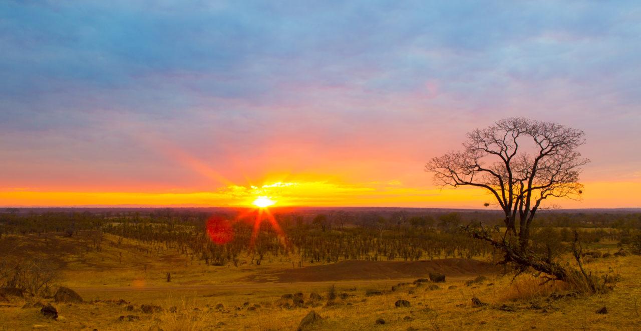 Zambia, south luangwa