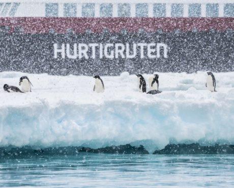 Adelie-pingviner-Brown-Bluff-Antarktis-HGR-115700_1024_foto_Karsen_Bidstrup_Hurtigruten
