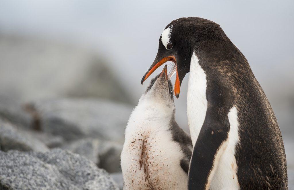 Damoy-Point-Antarktis-HGR-114732_1024_foto_Andreas_Kalvig_Anderson_Hurtigruten