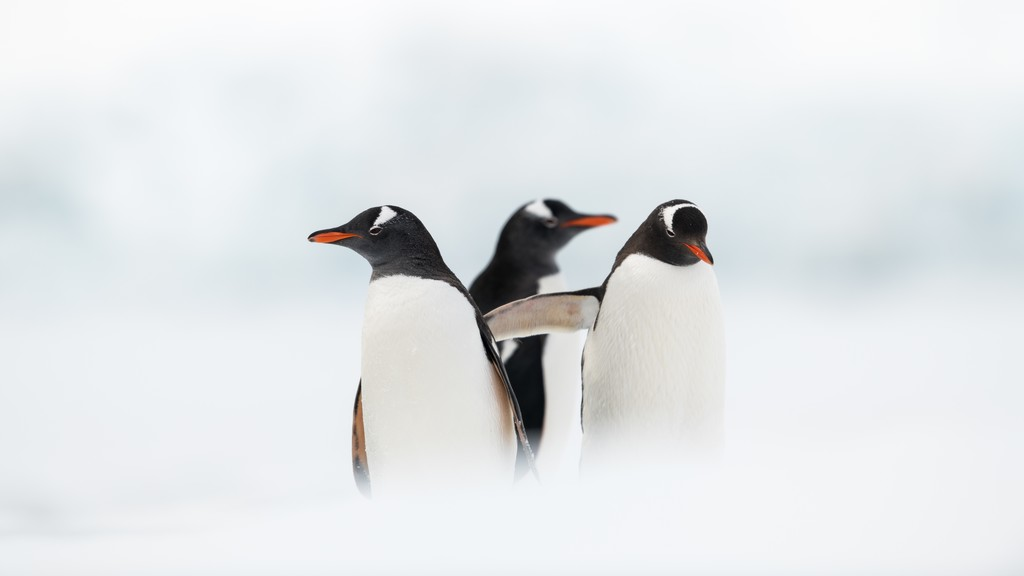 Half-moon-island-Antarktis-HGR-117523_1024_foto_Andreas_Kalvig_Anderson_Hurtigruten