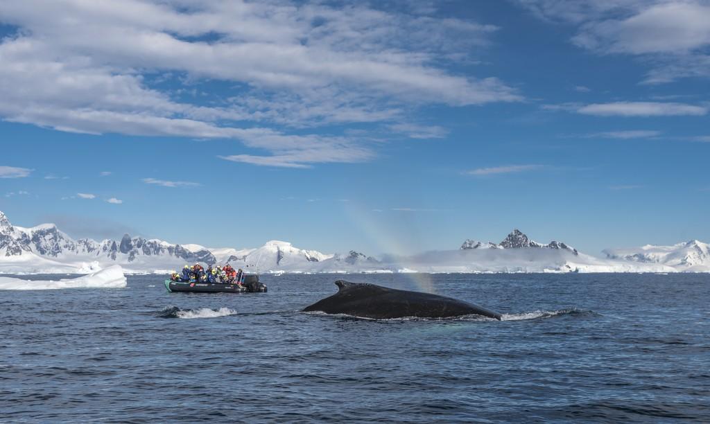 Knolhval-Wilhelmina-Bay-Antarktis-HGR-115709_1024_foto_Karsen_Bidstrup_Hurtigruten