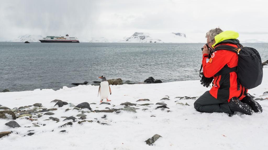 Liten-pingvin-foran-kameraet--HGR-117148_1024_foto_Karsen_Bidstrup_Hurtigruten