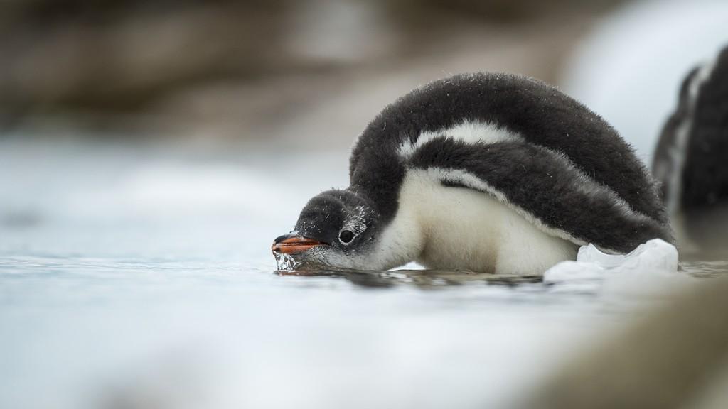 Neko-Harbour-Antarktis-HGR-114721_1024_foto_Andreas_Kalvig_Anderson_Hurtigruten