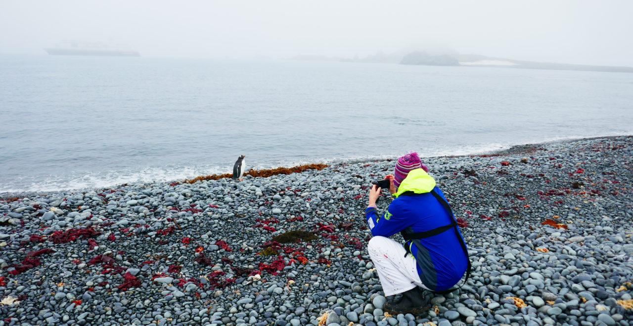 Antarktis, Astrids bilder, Hurtigruten, Midnatsol, Carpe Diem, pingviner, reiseleder Anne Bisgaard
