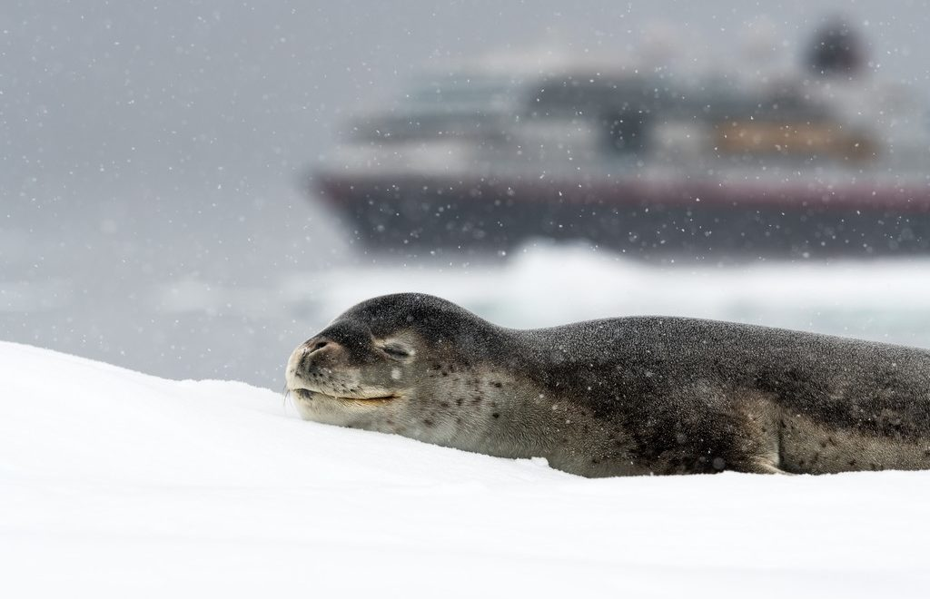 Wilhelmina-Bay-Antarktis-HGR-117531_1024_foto_Andreas_Kalvig_Anderson