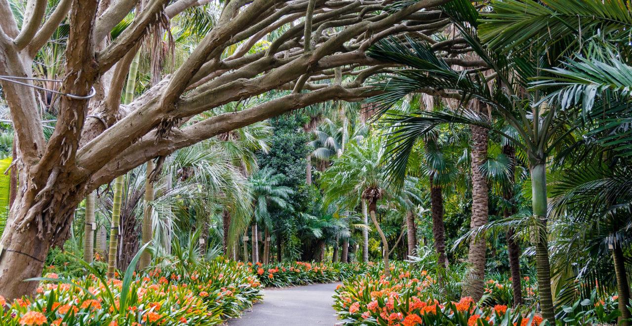 Botanisk hage, Sydney, Australia