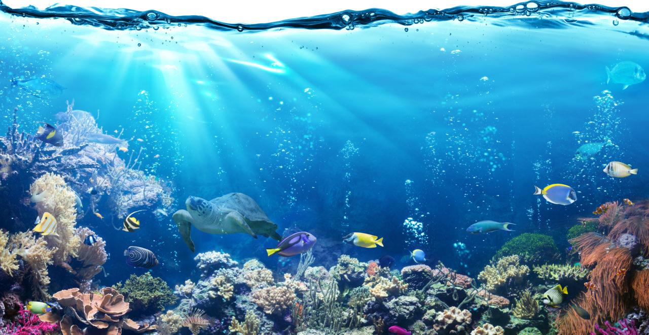 Great Barrier Reef, Queensland, Australia, fisk, dykking, snorkling