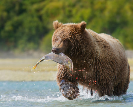 Alaska_Hurtigruten